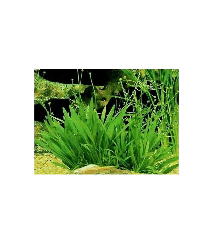 Planta de plastico para acuario o estanque nen far blanco - Plastico para estanques ...